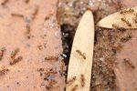 Ameisen in der Wand