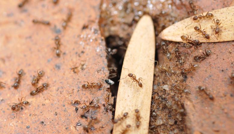 Ameisen im Mauerwerk » Was können Sie dagegen tun?