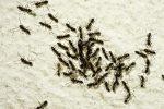 Ameisen auf dem Balkon