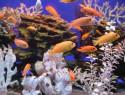 Ein Aquarium – Dekoration und schönes Hobby
