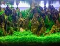 Aquarium Dekoration