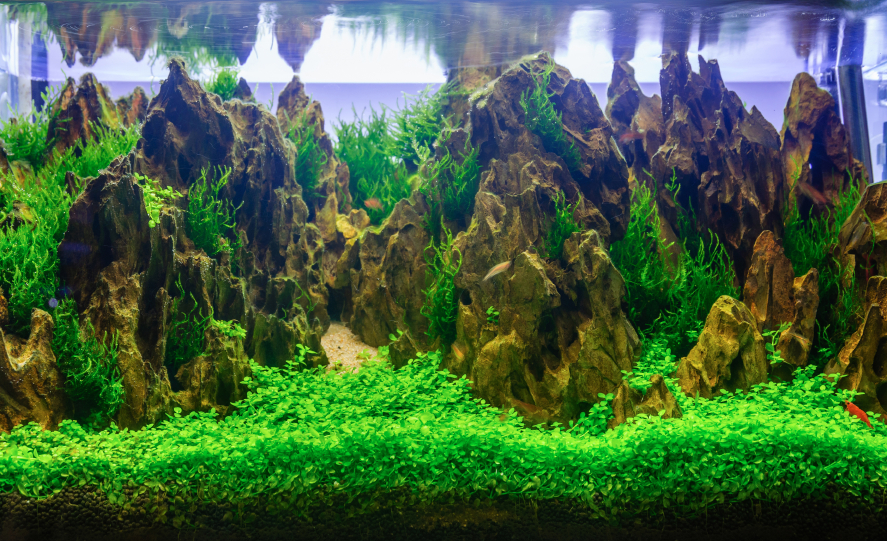 Aquarium Dekoration Schone Ideen Tipps Tricks