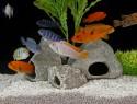 kupfer im aquarium schadet es den fischen. Black Bedroom Furniture Sets. Home Design Ideas