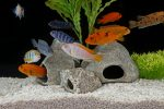 Aquarium Fische Arten