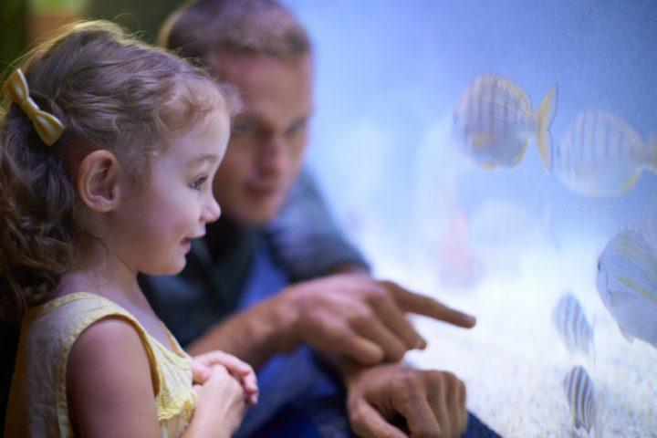 Aquarium Kinder