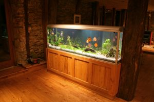 Aquarium Kosten