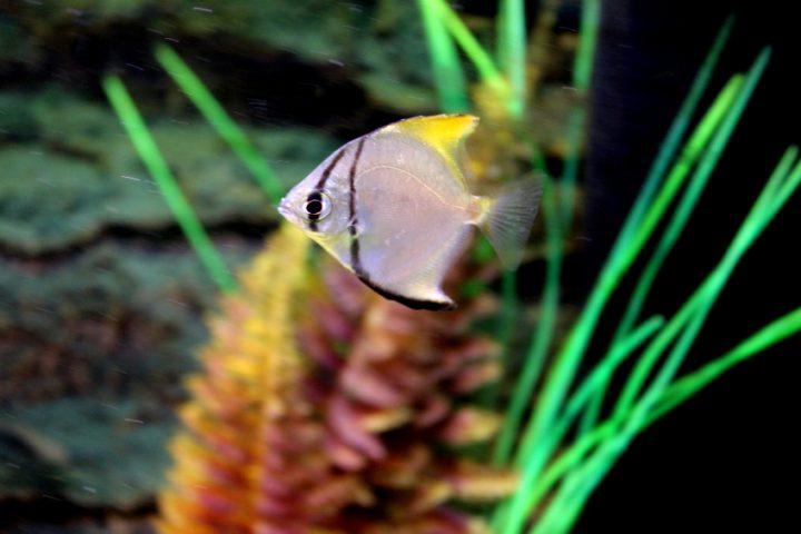 aquarium beleuchtung pflanzen
