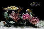 Aquarium Preise
