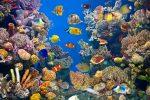 Aquarium Wasserwerte