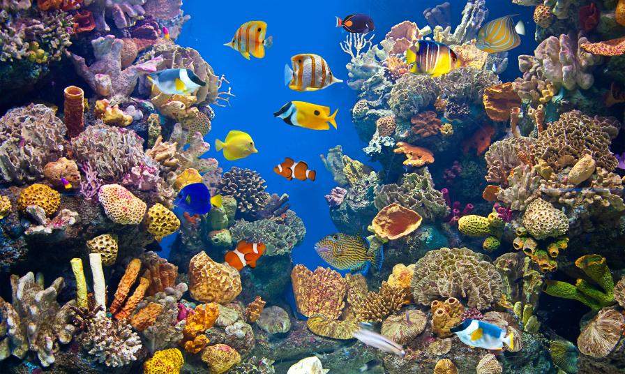Wasserwerte im aquarium das optimale gleichgewicht for Aquarium heizen