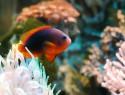 Aquarium bauen lassen