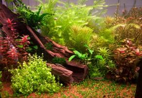 aquarium einrichten anleitung f r einsteiger. Black Bedroom Furniture Sets. Home Design Ideas