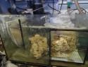 Aquarium abkühlen – einige Tricks