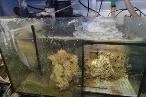Aquarium kühlen