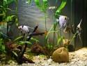 Aquarium kleben – eine Anleitung