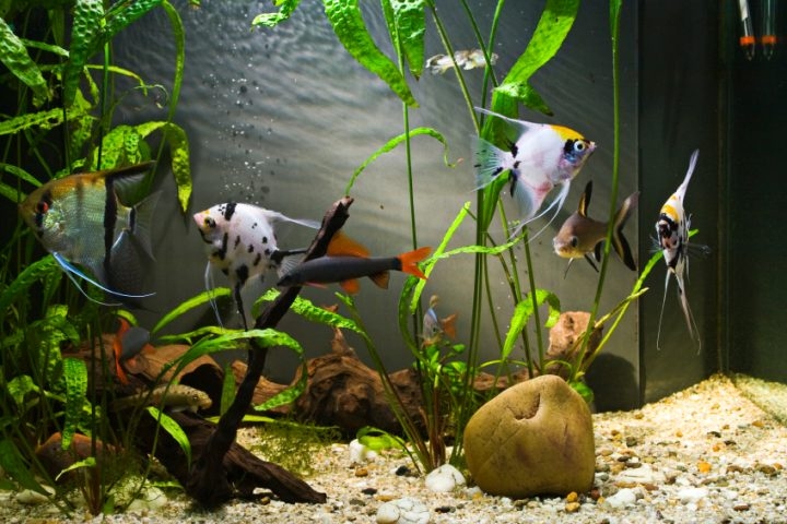 Aquarium Dekoration Schone Ideen Tipps Tricks