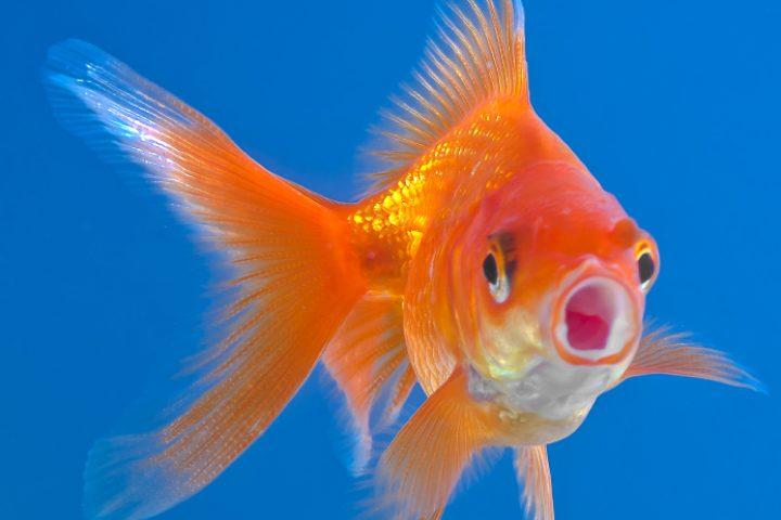 Aquarium undicht