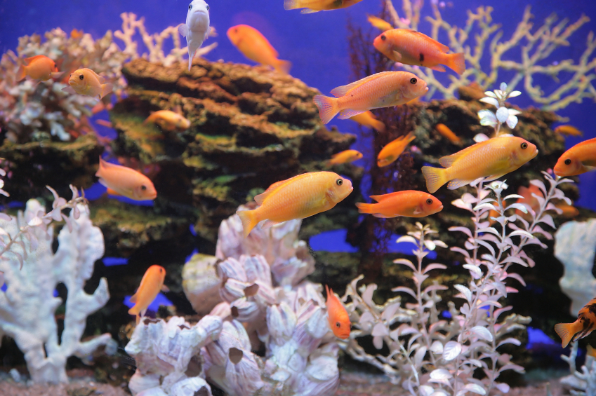 Aquarium der gro e berblick zum thema for Aquarium heizen