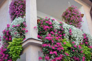 BalkonSichtschutz pflanzen