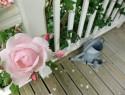 sichtschutz aus pflanzen f r den balkon wissenswertes. Black Bedroom Furniture Sets. Home Design Ideas