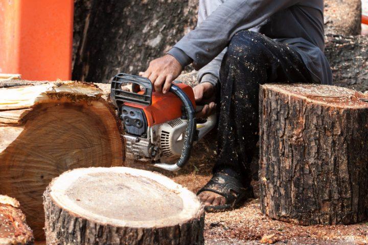 Gut gemocht Baum fällen lassen » So kalkulieren Sie die Kosten XN57