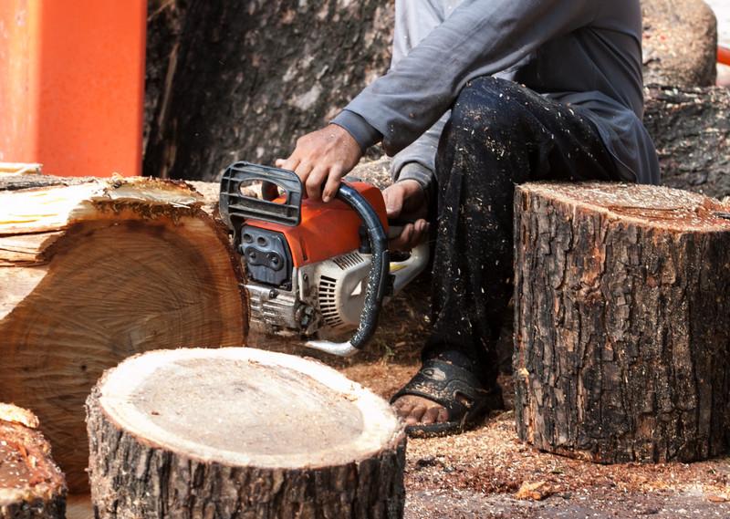 Einen Baum fällen lassen: Mit diesen Kosten müssen Sie rechnen!