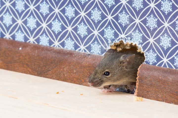 PU-Schaum gegen Mäuse
