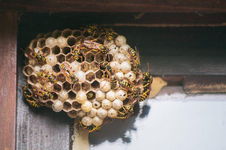 PU-Schaum gegen Wespen