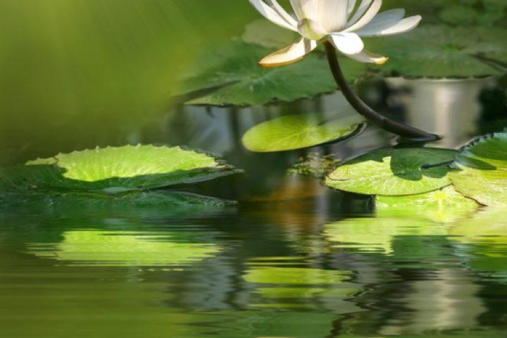 Biologische Wasseraufbereitung