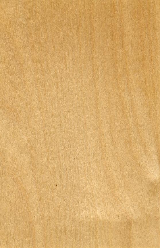 birkenholz preise f r schnitt und brennholz. Black Bedroom Furniture Sets. Home Design Ideas