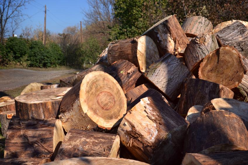 Buchenholz spachteln so machen sie 39 s richtig for Rauhfaser richtig streichen