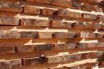 Buchenholz trocknen