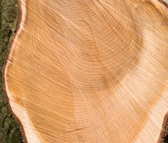 Thuja Holz Verwendung cedar holz eigenschaften verwendung und preise