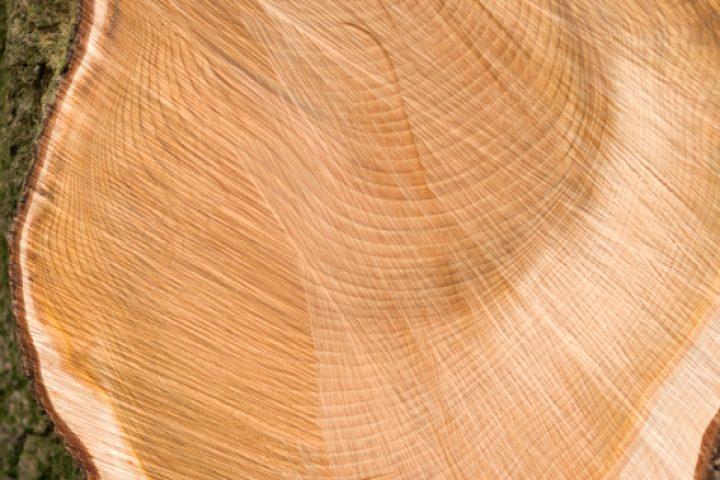 Cedar Holz