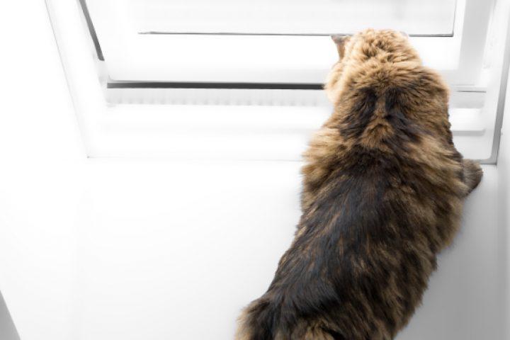 Dachfenster katzensicher