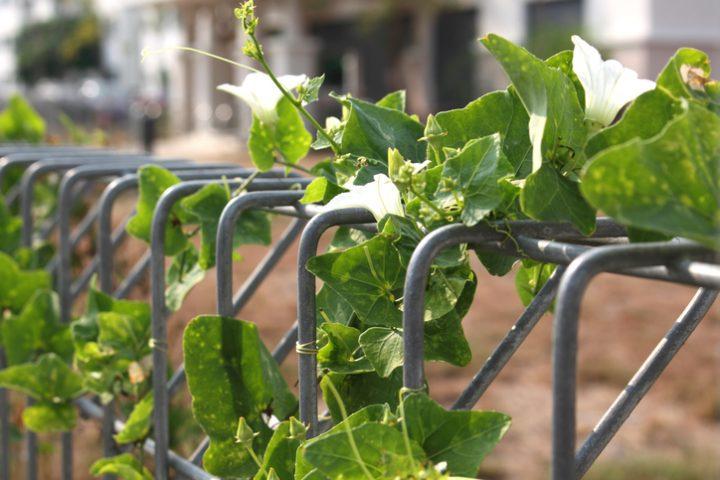 Doppelstabzaun Pflanzen