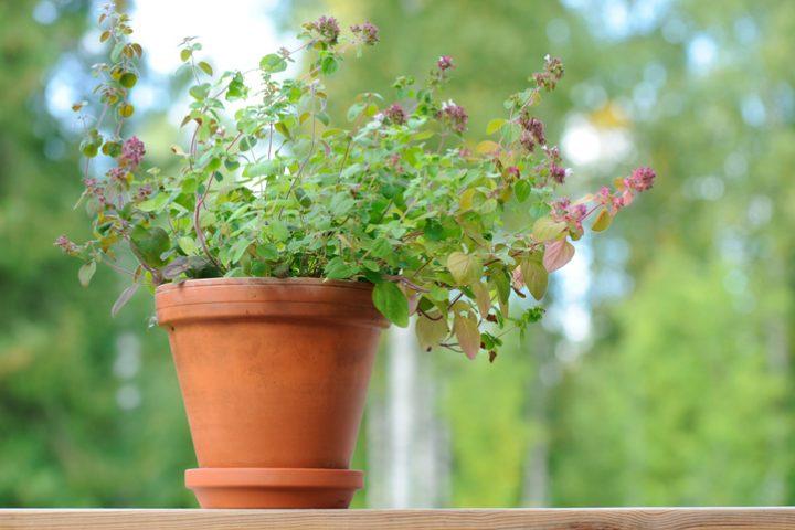 Drainage Blumentopf