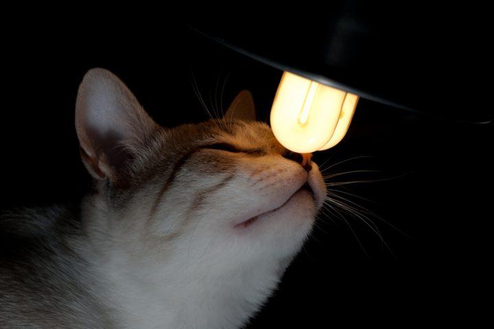 Energiesparlampe riecht unangenehm