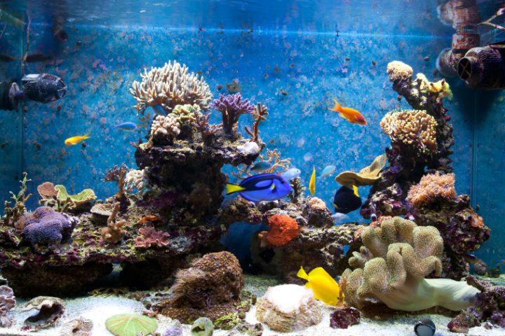 Epoxidharz Aquarium