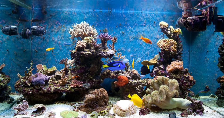 Epoxidharz f rs aquarium wof r eignet er sich for Aquarium heizen