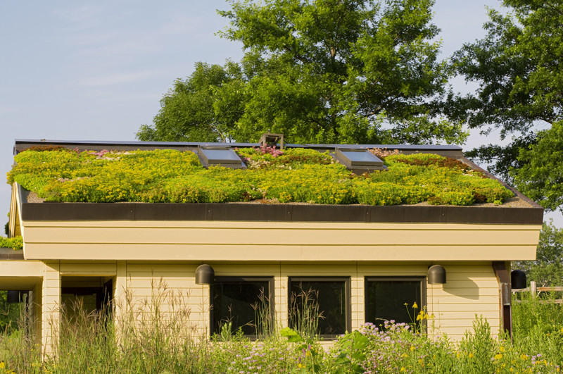 Extensive Dachbegrünung – wie ist sie aufgebaut?