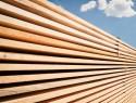 Holz für das Fenster: welche Holzarten kommen zum Einsatz?