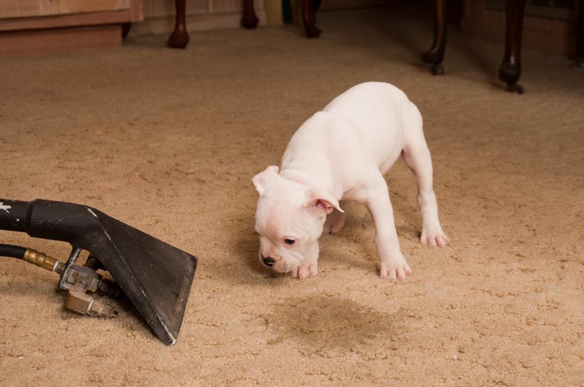 Alte Flecken Aus Teppich Entfernen : flecken aus teppich entfernen so geht 39 s ~ Lizthompson.info Haus und Dekorationen