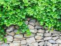 Gabionen und Pflanzen