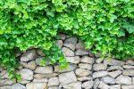 Gabionen bepflanzen
