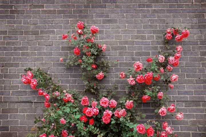 Gartenmauer Klinker
