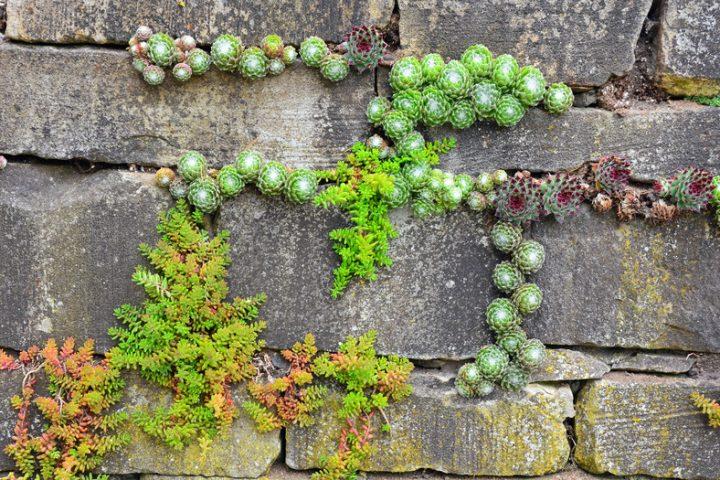 Gartenmauer Kosten