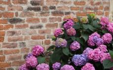 Gartenmauer mauern