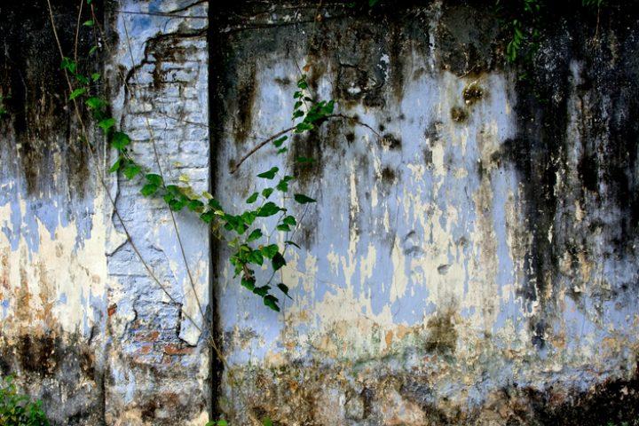Gartenmauer säubern