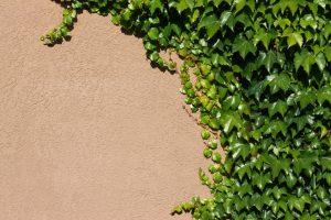 Gartenmauer streichen